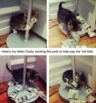 Here's My Kitten Dusty Working The Pole