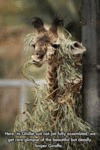 Here Its Ghillie Suit...
