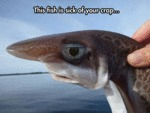 This Fish Is Tired Of Your Crap...