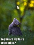 So You Are My Fairy Godmother?