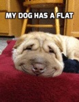 My Dog Has A Flat