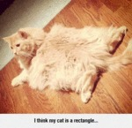 I Think My Cat Is A Rectangle...
