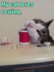 My Cat Loves Sewing