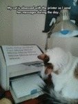 My Cat Is Obsessed With The Printer