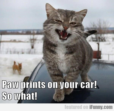 Paw Prints On Your Car! So What!