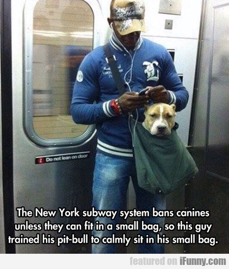 The New York Subway System Bans Canines Unless...