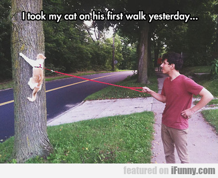 I Took My Cat On His First Walk Yesterday...