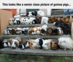 This Looks Like A Senior Class Picture Of Guinea..