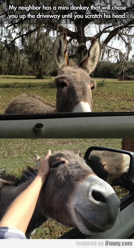 my neighbor has a mini donkey that will chase you