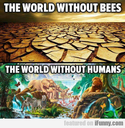 The World Without Bees...