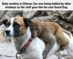 Baby Monkey In Chinese Zoo Was Being Bullied