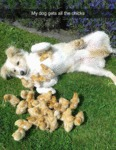 My Dog Gets All The Chicks