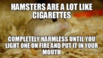 Hamsters Are A Lot Like Cigarettes...