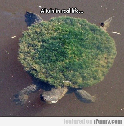 A'tuin In Real Life...