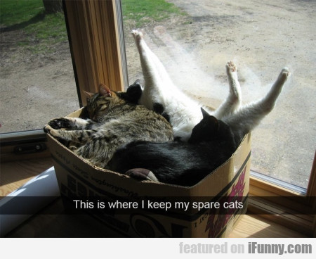 This is where I keep my spare cats