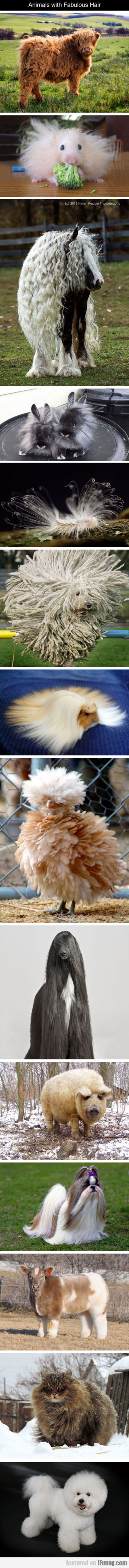 Animals with fabulous hair