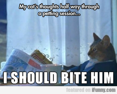My cat's thoughts half way through a...