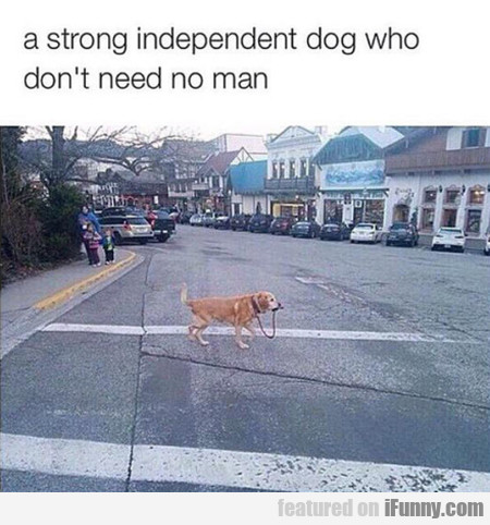 A Strong Independent Dog Who Don't Need..