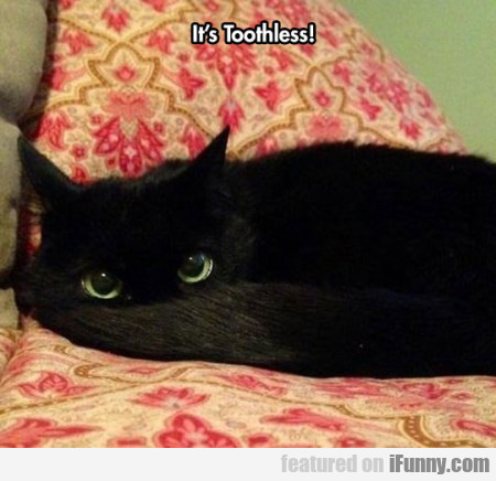It's Toothless !