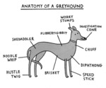 Anatomy Of A Greyhound