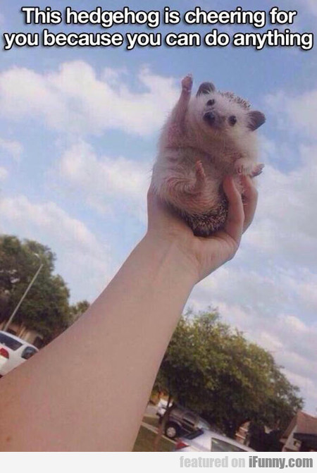 this hedgehog is cheering for you