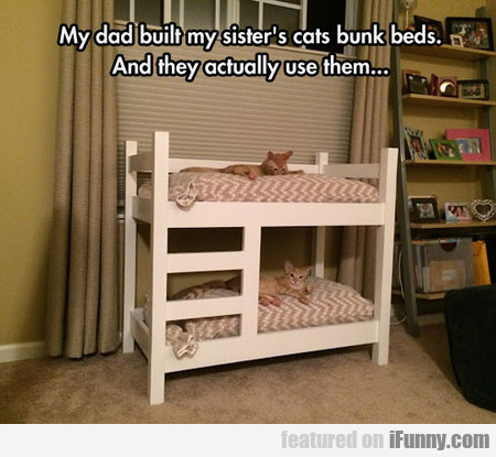 My Dad Built My Sister's Cats Bunk Beds