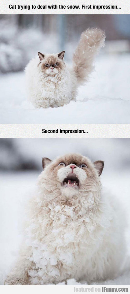Cat Trying To Deal With The Snow. First Impression