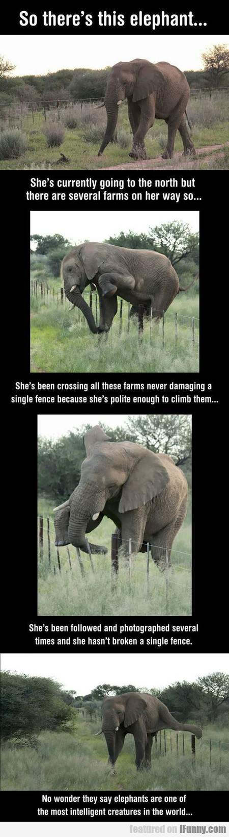 So There's This Elephant...