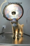 Ready For Your Cat Scan?