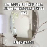 Do You Ever Take Your Pet To The Mirror?