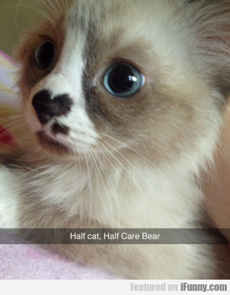 Half Cat, Half Care Bear