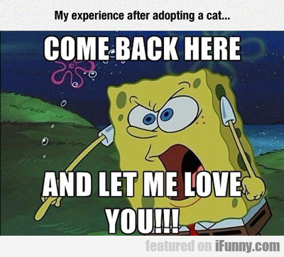 my experience when adopting a cat...