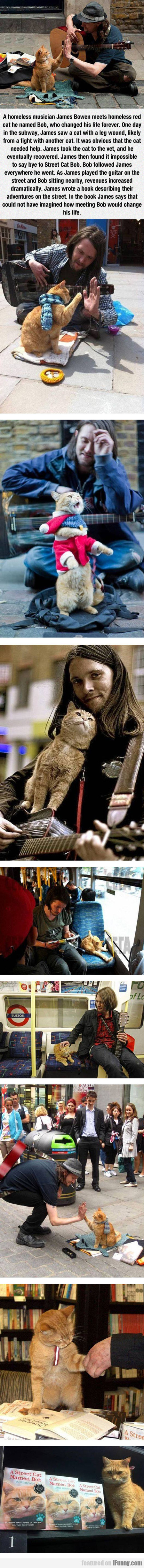 A Homeless Musician, James Bowen, And His Cat