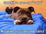 Chuckie's Eyes Say Sorry