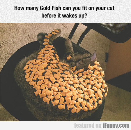 How Many Gold Fish Can You Fit On Your Cat
