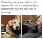 These Dogs Work In Courtrooms