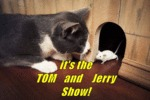 It's The Tom And Jerry Show