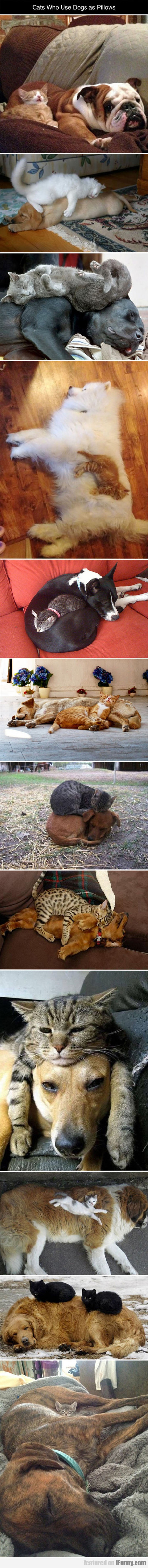 Cats Who Use Dogs As Pillows