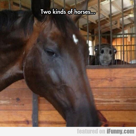 two kinds of horses