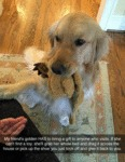 My Friend's Golden Has To Bring A Gift