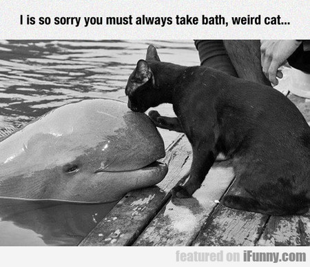 I Is So Sorry You Must Always Take Bath, Weird Cat