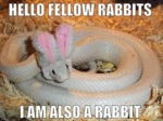 Hello Fellow Rabbits, I Am Also A Rabbit...