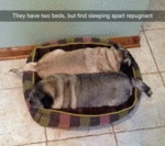 They Have Two Beds, But Find Sleeping Apart