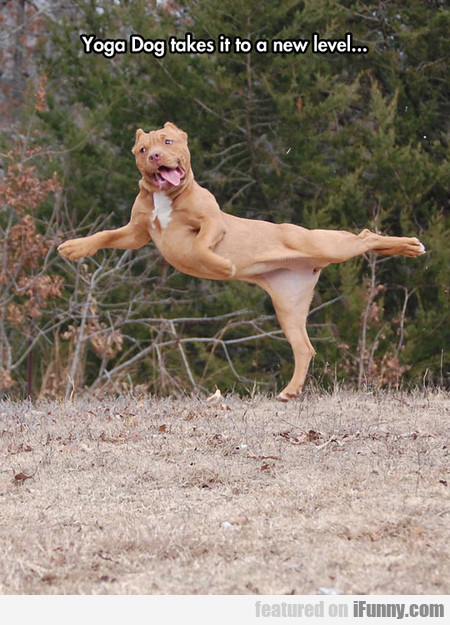Yoga Dog takes it to a new level...