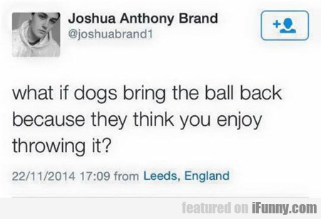 What If Dogs Bring The Ball Back