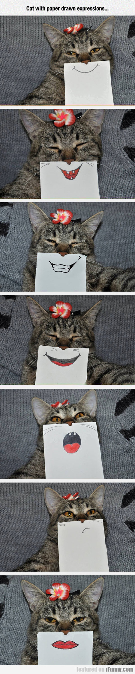 Cat With Paper Drawn Expressions...
