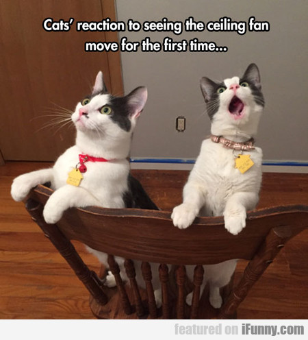 Cats' Reaction To Seeing The Ceiling Fan