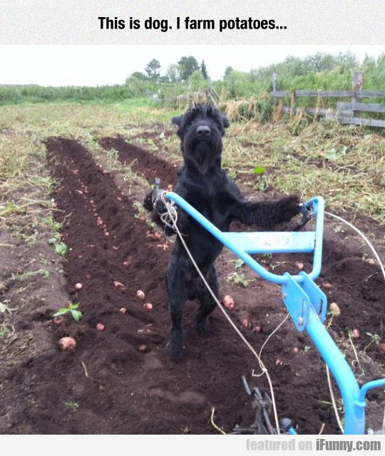 This Is Dog. I Farm Potatoes...