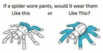 If A Spider Wore Pants...