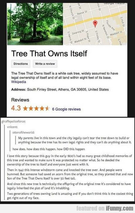The Tree That Owns Itself is a white oak tree